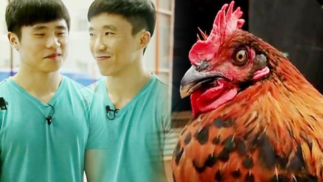 기계체조 선수들의 기를 충전해줄 신선한 '닭'