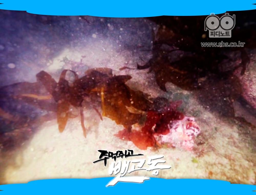 이식한 해조류의 모습