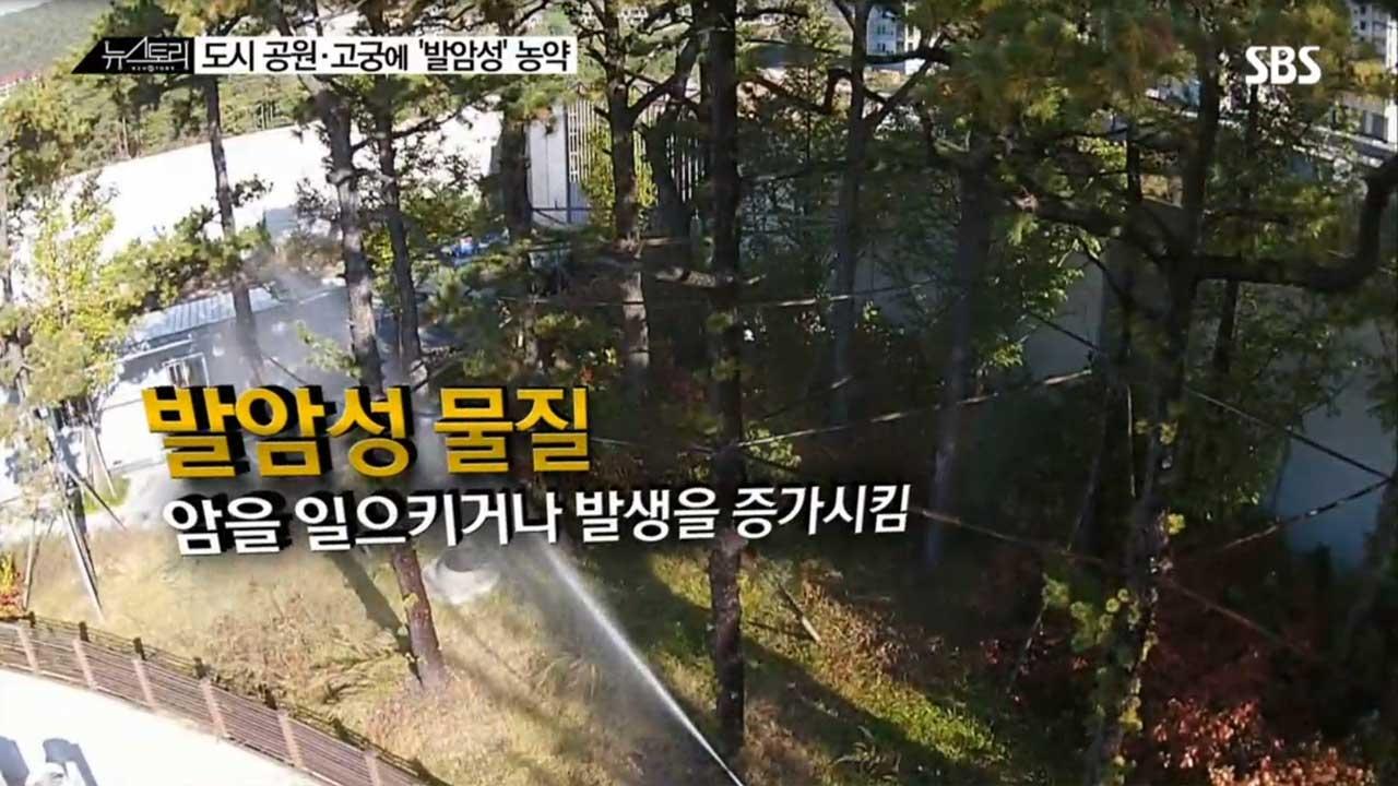 SBS 뉴스토리 도시 공원·고궁에 발암성 농... 13회 썸네일 이미지