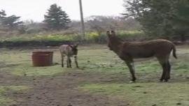 TV 동물농장