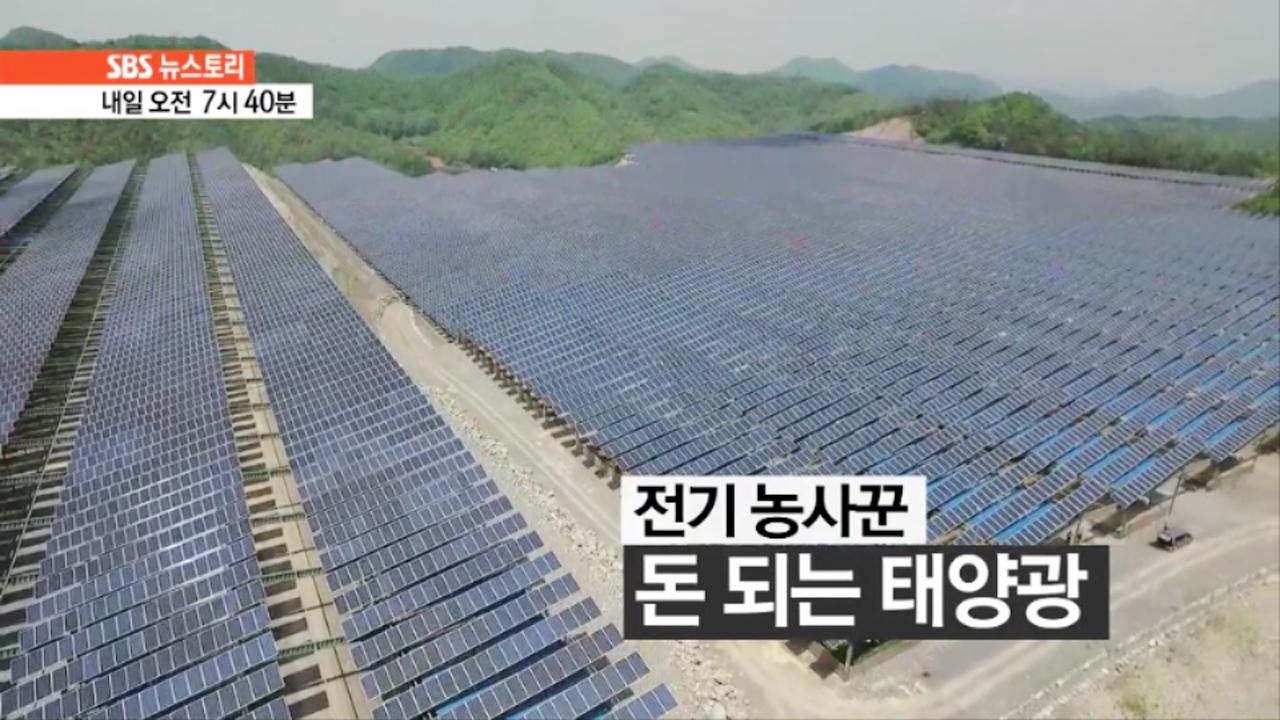 SBS 뉴스토리 전기 농사꾼 - 돈 되는 태... 132회 썸네일 이미지