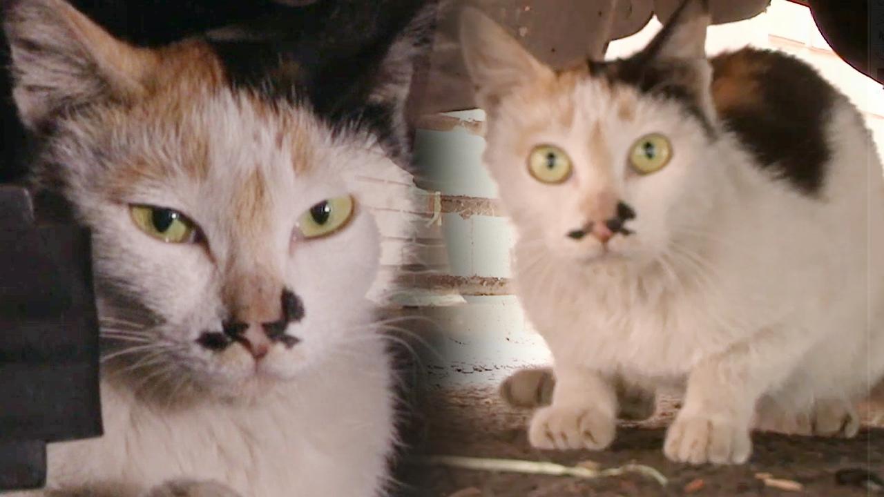 TV 동물농장 영등포 차 밑 고양이 - [... 823회 썸네일 이미지