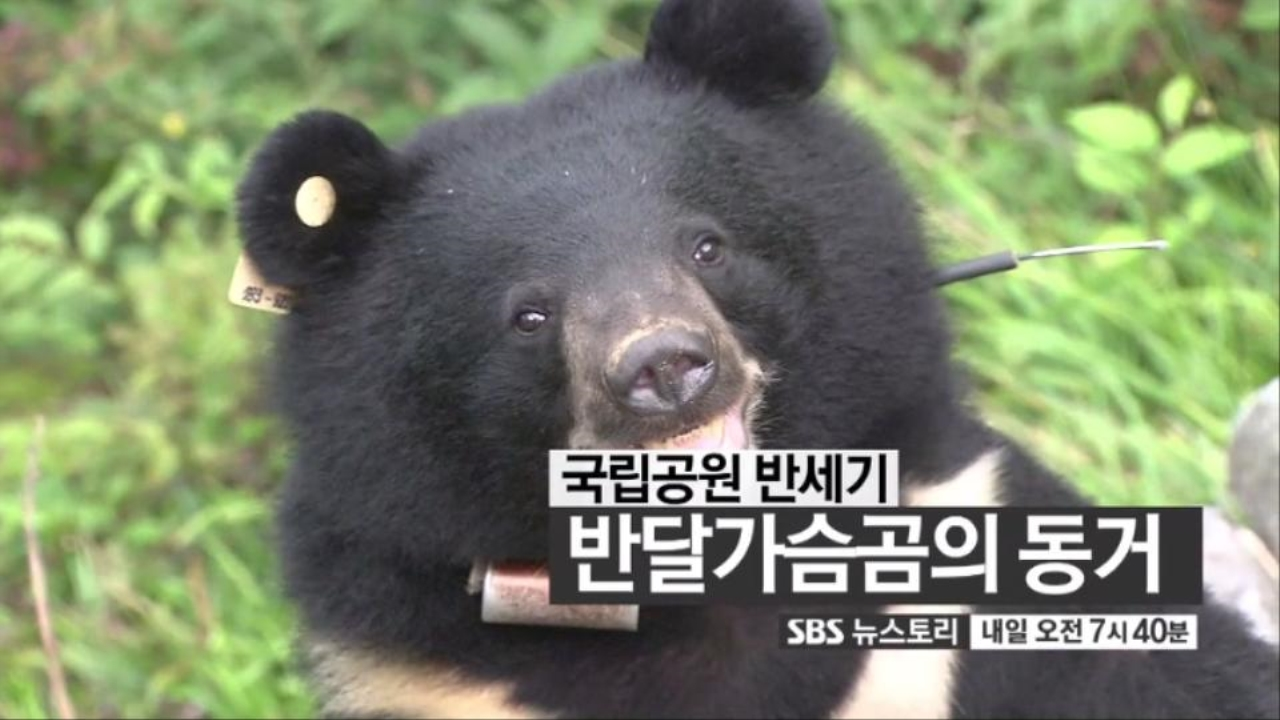 SBS 뉴스토리 전쟁과 슬픔의 공동경비구역 ... 160회 썸네일 이미지