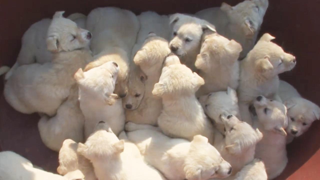 TV 동물농장 서산 23마리 강아지 가족 845회 썸네일 이미지