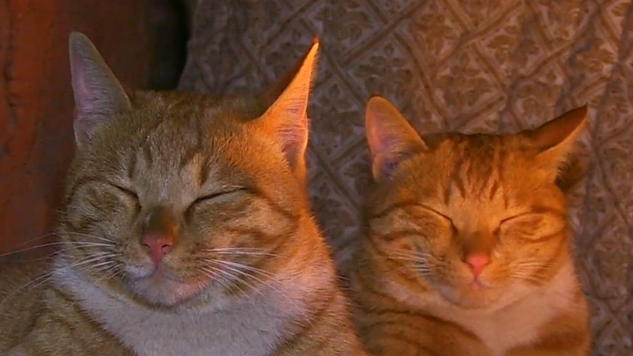 TV 동물농장 고양이 형제의 무전취식 라이... 852회 썸네일 이미지
