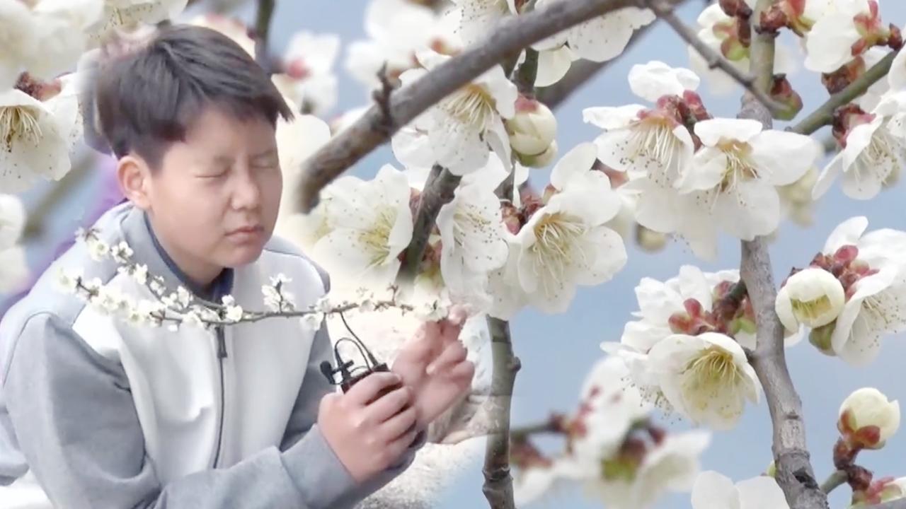 꾸러기 탐구생활 매화가 만든 꽃의 물결 762회 썸네일 이미지
