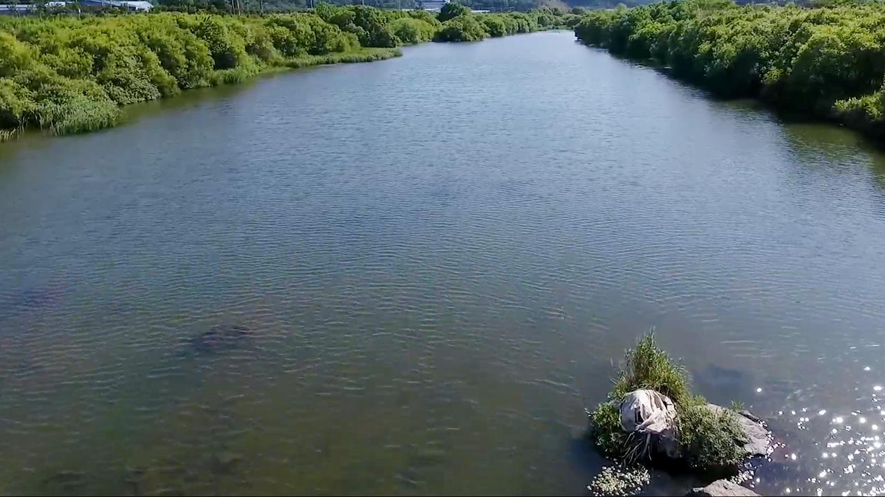 790회 물은 생명이다