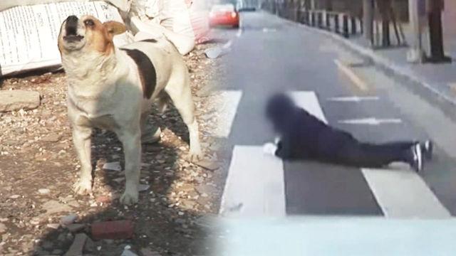 차도로 뛰어드는 사람들! 이유는 '목줄 없는 강아지'