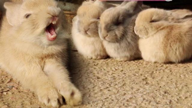 치명적인 토끼 6남매, 보고만 있어도 '심쿵'