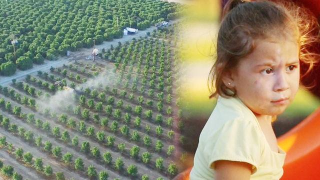 농약 살충제로 인한 외국 아이들의 '자폐증 증가'