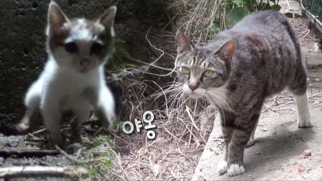 5일째 벽에 갇힌 새끼 지키는 어미 고양이