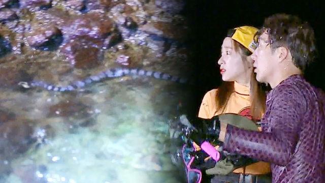 병만족, 아찔한 바다뱀 등장에 '바닷속 탈출'