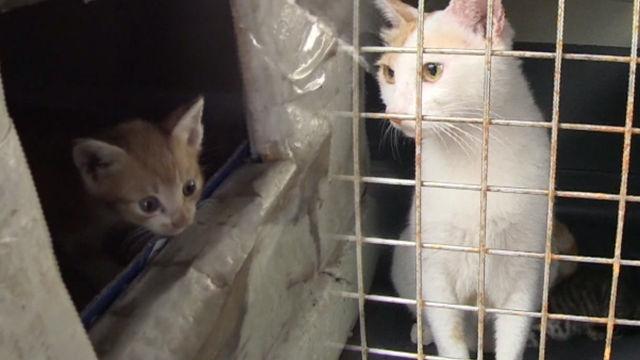 초등학교 어벤져스는 '고양이 가족'을 지킬 수 있을 것... 썸네일 이미지