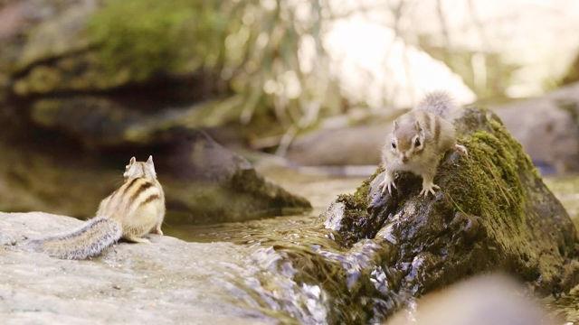 강 건너 세상을 동경한 다람쥐의 '위대한 도전'