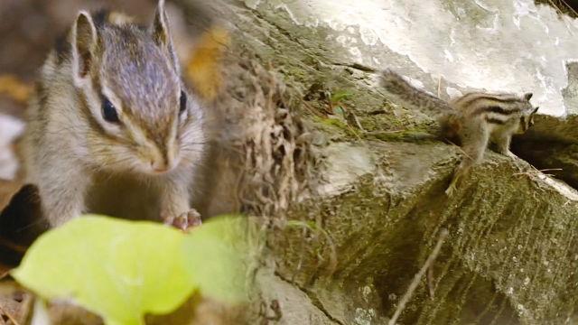 절벽위에서도 포기를 모르는 다람쥐의 근성