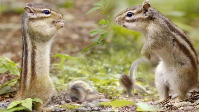 먹이를 향한 다람쥐의 치열한 싸움 현장!