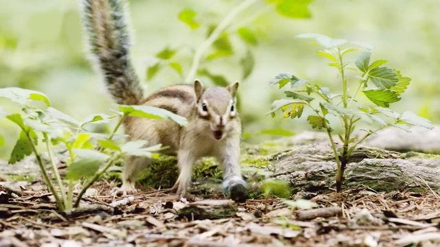 매미의 힘찬 날갯짓에 기겁하며 놀라는 다람쥐!