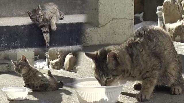 제대로 걷지 못 하는 떠돌이 '장애 고양이'의 겨울