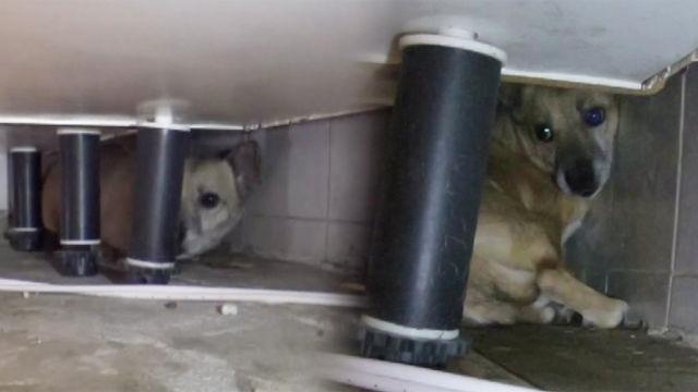 싱크대 밑에서 나오지 않는 犬 '가비'