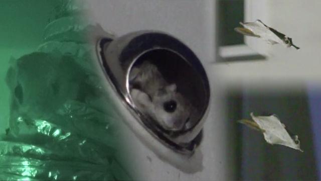 최초공개! 야생 '하늘다람쥐' 환풍구 라이프