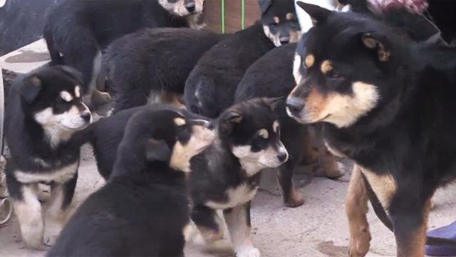 11남매 아빠犬 '진품이'의 기 살리기 프로젝트!