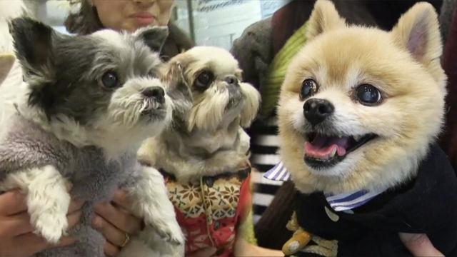 장수犬들의 건강 비법 大 공개!