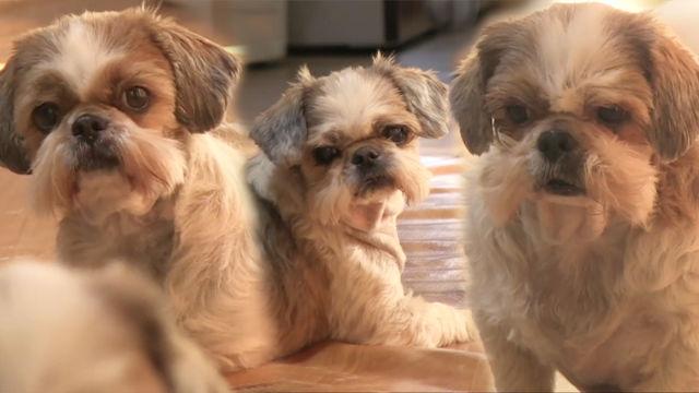 꽃님이네, 3대가 장수하는 장유유서 犬들