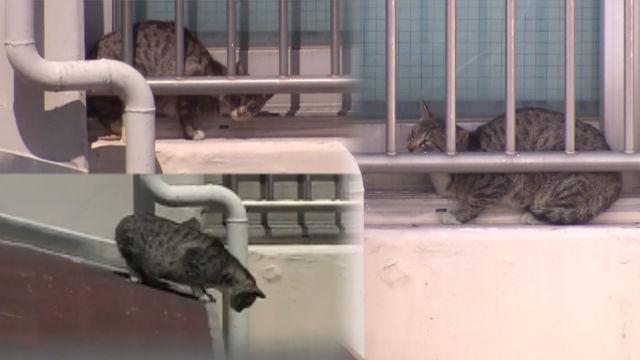 아찔한 '17층 아파트' 지붕 위에 고립된 고양이?! 썸네일 이미지