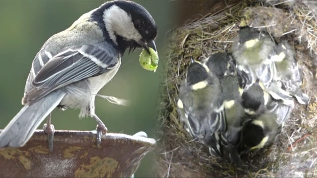 국내 최초! 호리병 속에 둥지를 튼 새?! 썸네일 이미지