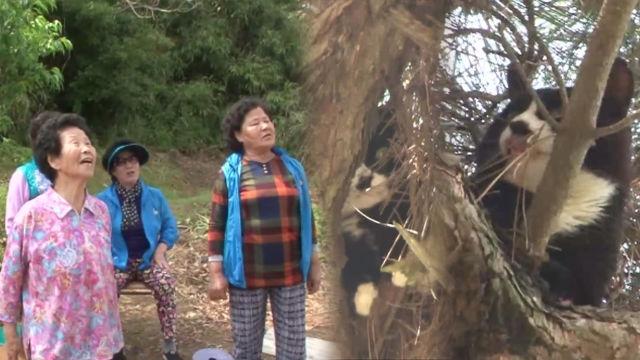 아찔한 10m 나무 위 고양이와 할벤져스★ 썸네일 이미지