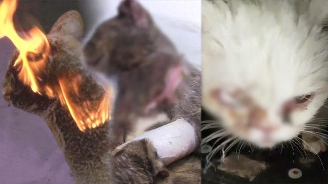 충격!! 연달아 발생한 악몽 같은 '고양이 학대 사건' 썸네일 이미지