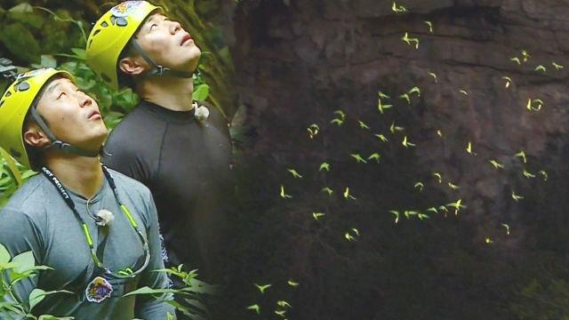 김병만·최현석, 장관을 연출하는 초록 앵무새 등장에 '감동'