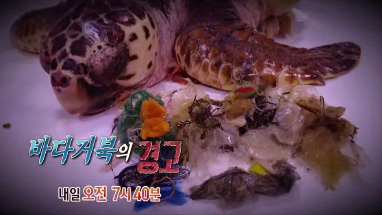 [5월 25일 예고] 위기의 쓰레기 바다 '바다거북의 경고' 썸네일