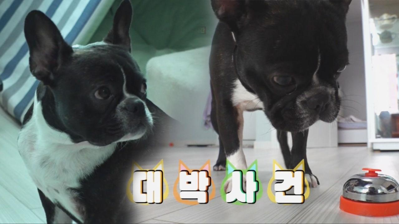 울보 만두의 놀라운 개과천선 (feat. 다급한 종소리)