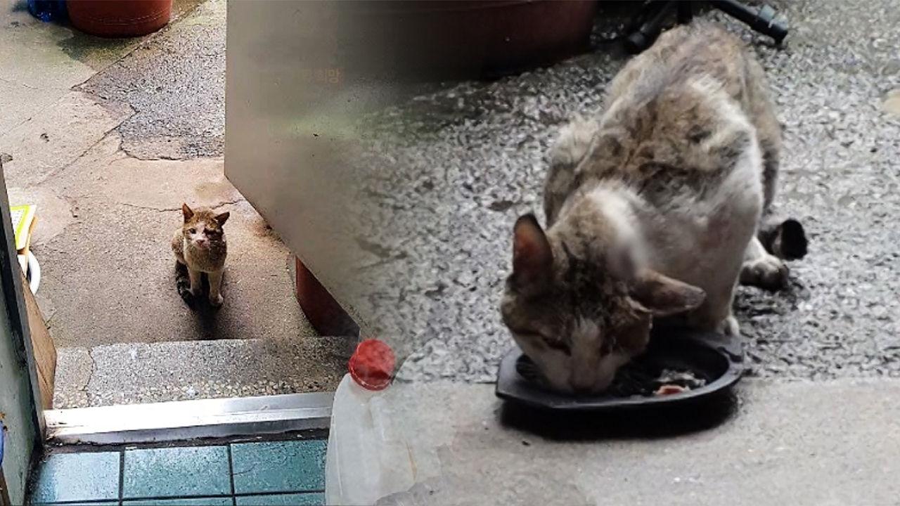 머리에 대못이 박힌 채 동네를 떠도는 의문의 고양이