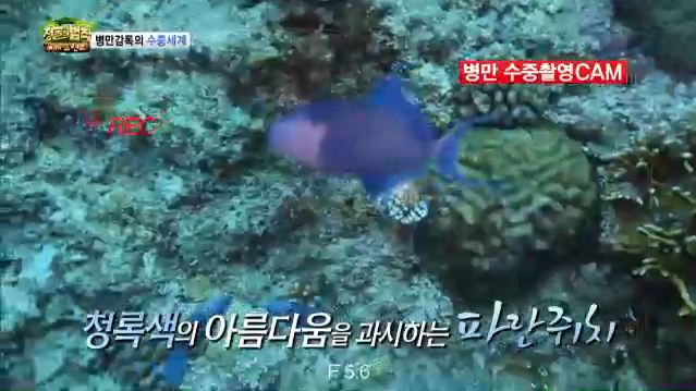 김병만 직접 찍은 팔라우 수중촬영(정글의법칙시즌3)